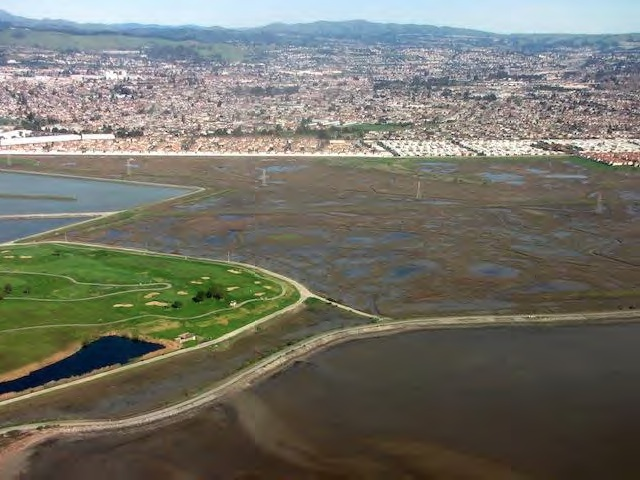 Two decades of efforts to clean up the bay and revive its shorelines are paying dividends in the form of thriving South Bay marshes. image credit: courtesy Ellie Cohen