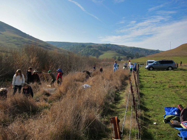 The public has rediscovered and taken up responsibility to care for local watersheds, as has this group working to restore Chileno Creek.