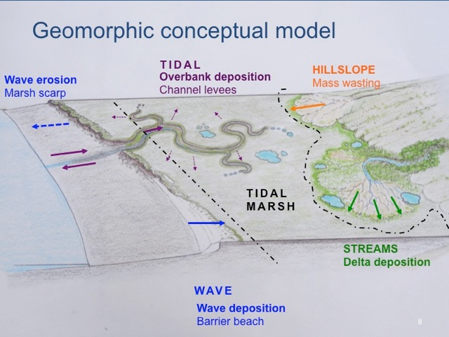 Natural wave and sediment processes sustain marshes. Image: Peter Baye, Sarah Richmond, Roger Leventhal