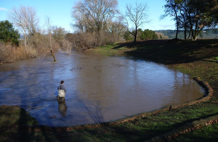 Instream salmonid habitat and winter refugia created as part of the Napa River Restoration Project. Image credit: NCRCD