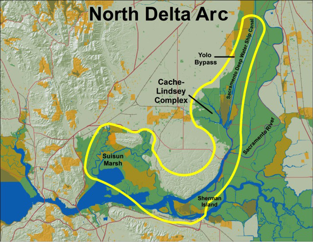 The North Delta Arc region is a rarity within the Bay Delta system because it offers superior habitat conditions for native fish. Image credit: Amber Manfree