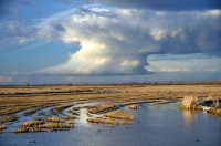 When flooded during the rainy season, the agricultural fields of the Yolo Bypass provide a place for native fish to fatten and waterfowl to rest. Image credit: Carson Jeffres