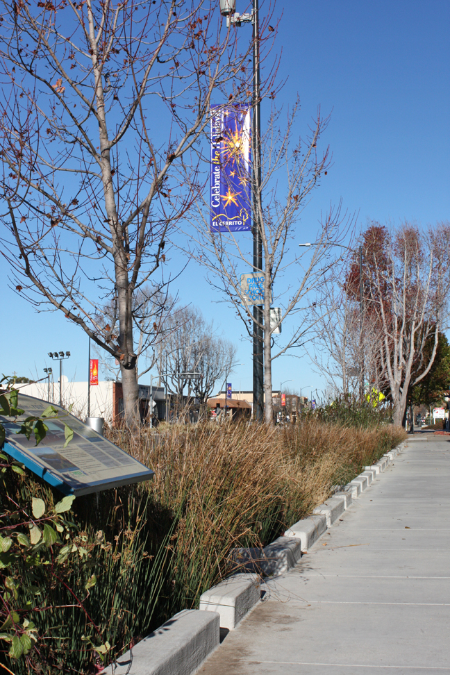 Bay Area cities have embraced strategies like street plantings designed to retain and filter runoff before it can enter the Bay. Image credit: Kathleen Wong