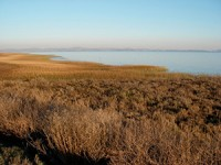 Outboard marshes along San Pablo Bay shoreline in the national wildlife refuge near Skagg's Island. Photo: Jude Stalker.