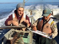 Andreas & Aaron leopard sharks