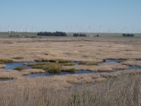 Overlook Club. Diked marsh with mix of senscent cattails and Phragmites (brown) and tules (green) with intermixed open water, Montezuma hills windmills in distance. Photo by Dan Gillenwater, March 2012, pre restoration.
