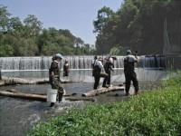 SFPUC staff electrofishing near Sunol Dam prior to its removal. Photo by Brian Sak.