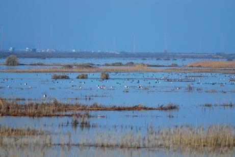 Ducks flying off water