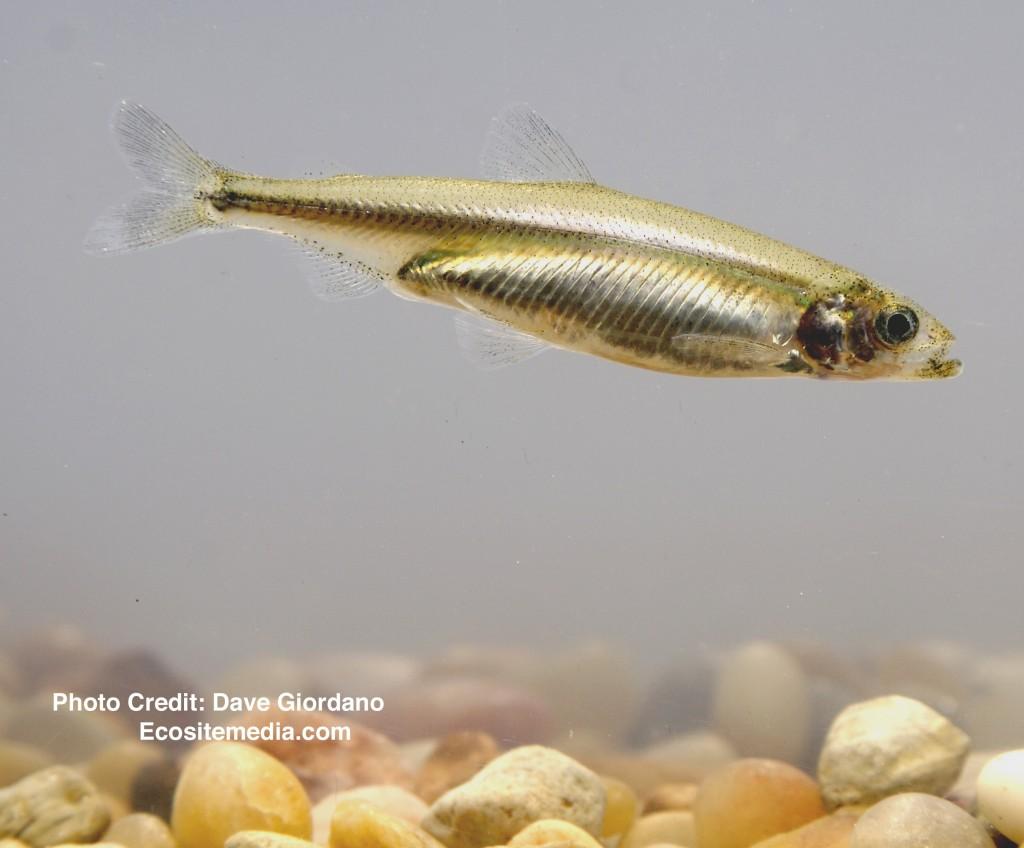 1 - Fish