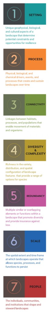 Resilience principals described in the Landscape Resilience Framework. Graphic: Ruth Askevold