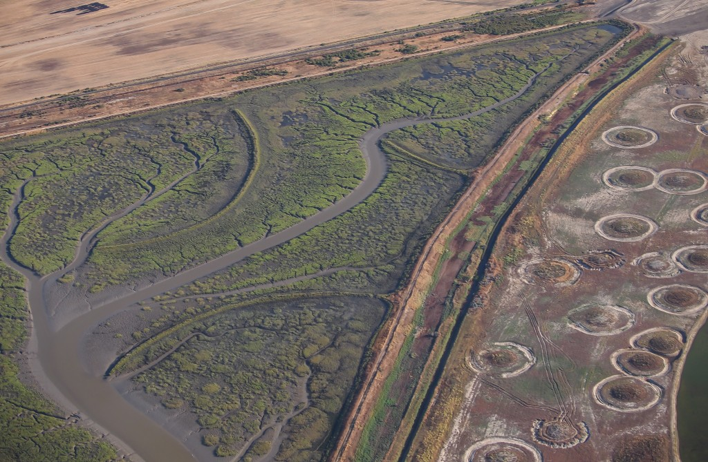 Bay restoration projects increasingly plan for rising sea levels, such as these marsh mounds for critters fleeing high water at Sear's Point in the North Bay. Photo: Bird's Eye View.