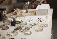 500-specimens_large