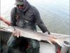 Above: Lewis holding white sturgeon in Delta. Photo: Jim Ervin