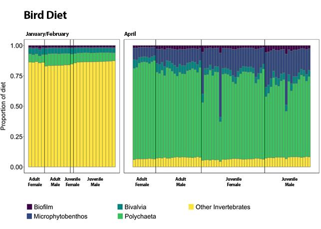 waterbird  diet chart