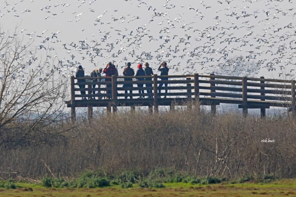 Photo of bird watchers by Rick Lewis