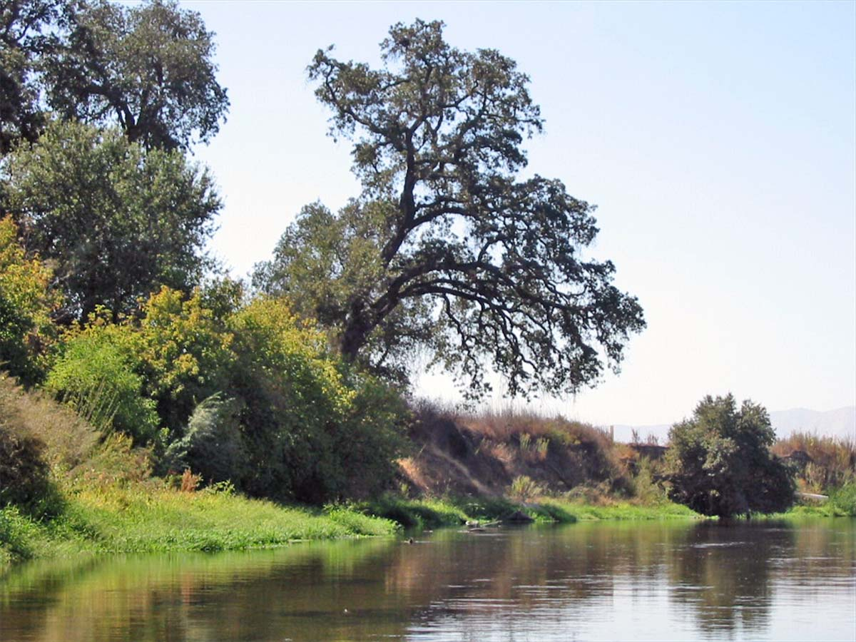 photograph of beautiful tree overhangin a river